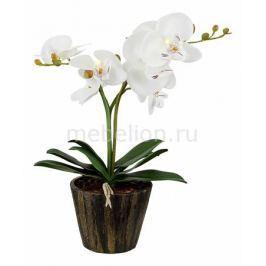 Растения в горшке Globo FlowerPower 28002