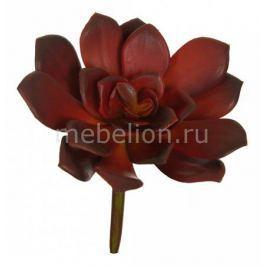 Цветок искусственный Home-Religion Цветок (14 см) Суккулент 58007200