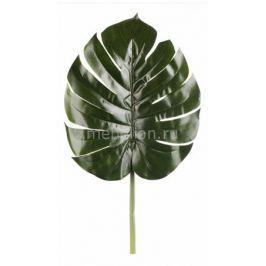 Зелень Home-Religion (70 см) Широкий лист 21004300