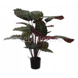 Растение в горшке Home-Religion (60 см) Калатея розеопикта 58008700