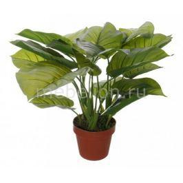 Растение в горшке Home-Religion (50 см) Потос 58008500