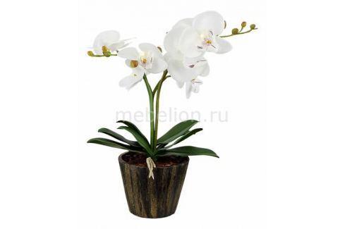 Растения в горшке Globo FlowerPower 28002 Растения в горшке