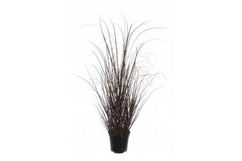 Растение в горшке Home-Religion (60 см) Трава 58005600 Растения в горшке