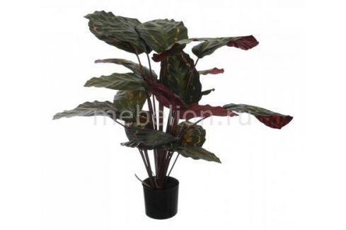Растение в горшке Home-Religion (60 см) Калатея розеопикта 58008700 Растения в горшке